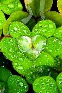 Beautiful_Rain