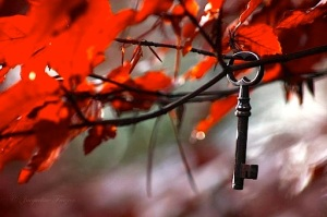 KEY:RED LEAVES