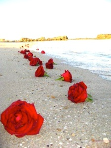 ROSES RED-ALONG BEACH