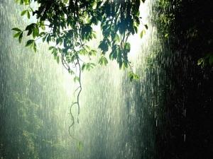 Rain-Forest-Wallpaper-666x500