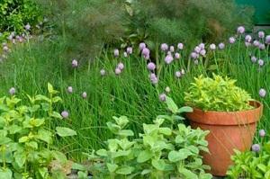 109578-400x266-Herb_garden