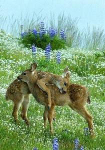 baby deer:fauns:_n