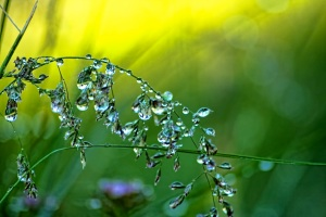 Dewy_Morning_by_arphot