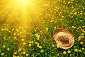 nature-sun-grass-herbs-flowers-dandelions-yellow-green-hat