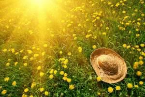 nature-sun-grass-herbs-flowers-dandelions-yellow-green-hat