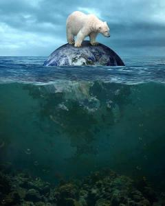 EARTH:POLAR BEAR_n