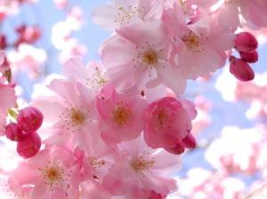 23830-pretty-spring-flowers