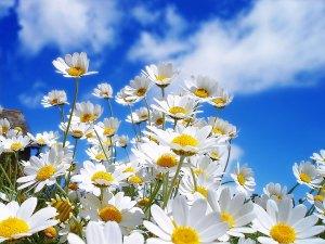 Spring-flowers-wallpaper