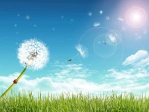 summer_day_013451_