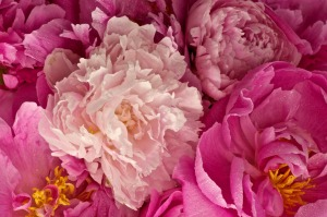 3d-abstract_other_peonies-pink_44441