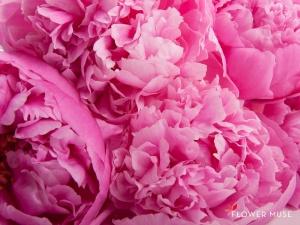 FlowerMuse-Peonies-FS