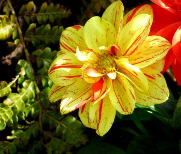 garden flowers birds 093