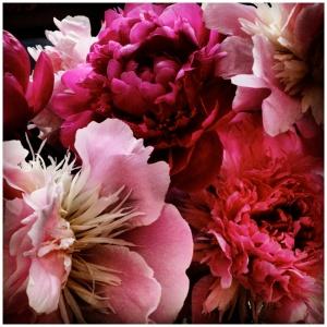 John-Arsenault-Pink-Peonies-web1