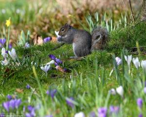 SQUIRREL:11041937_839896942713795_896837002842347209_o