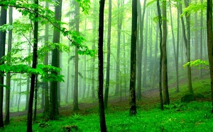 green forest 1440x900 wallpaper_www.wallmay.net_93