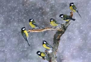 BIRDS:10986510_959163310761864_8347429340759440981_n