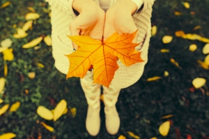 Autumn leaves in girl hands, instagram toned