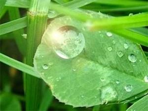 droplet-1