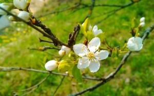 springtime-2-638