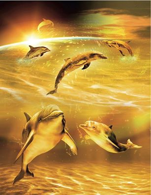 golden dolphin:944915_962057610496379_5254489642616433595_n